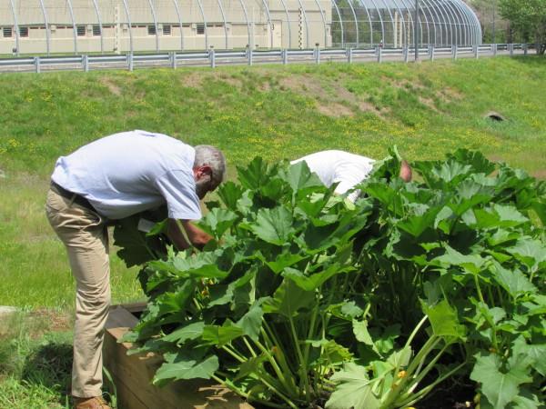 horticulture-97a538321f853c513b867e9002c0b395